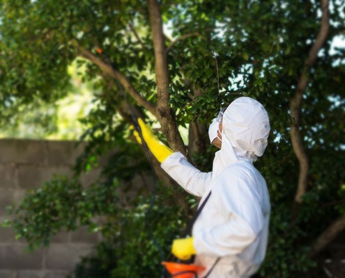 5-Reasons-Why-You-Should-Hire-a-Pest-Control-Brisbane-Expert