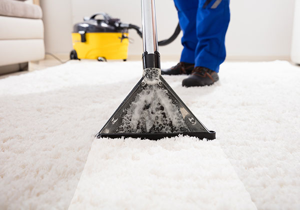 Do you need carpet cleaning or pest control services