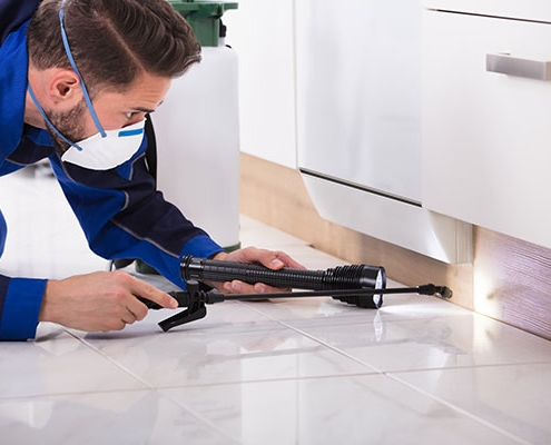 How Pest Control Brisbane Services Work