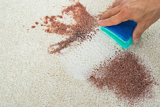 How To Remove Blood Stains From Your Carpet Sun Dry Carpet